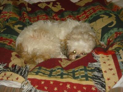 Winnie attempting to nap